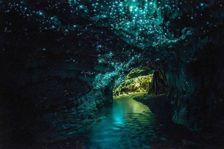 Exploring Waitomo: New Zealand's Luminescent Glowworm Caves