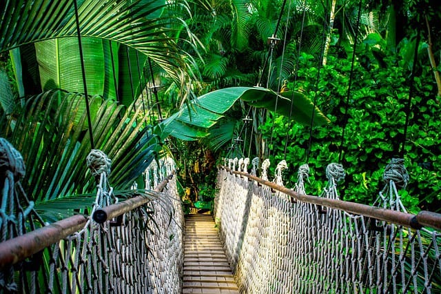 How to See the Rainforest on a Budget