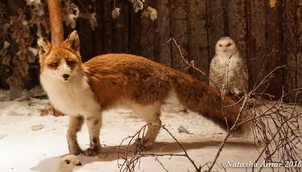 Skelleftea in Swedish Lapland: Wildlife exhibit