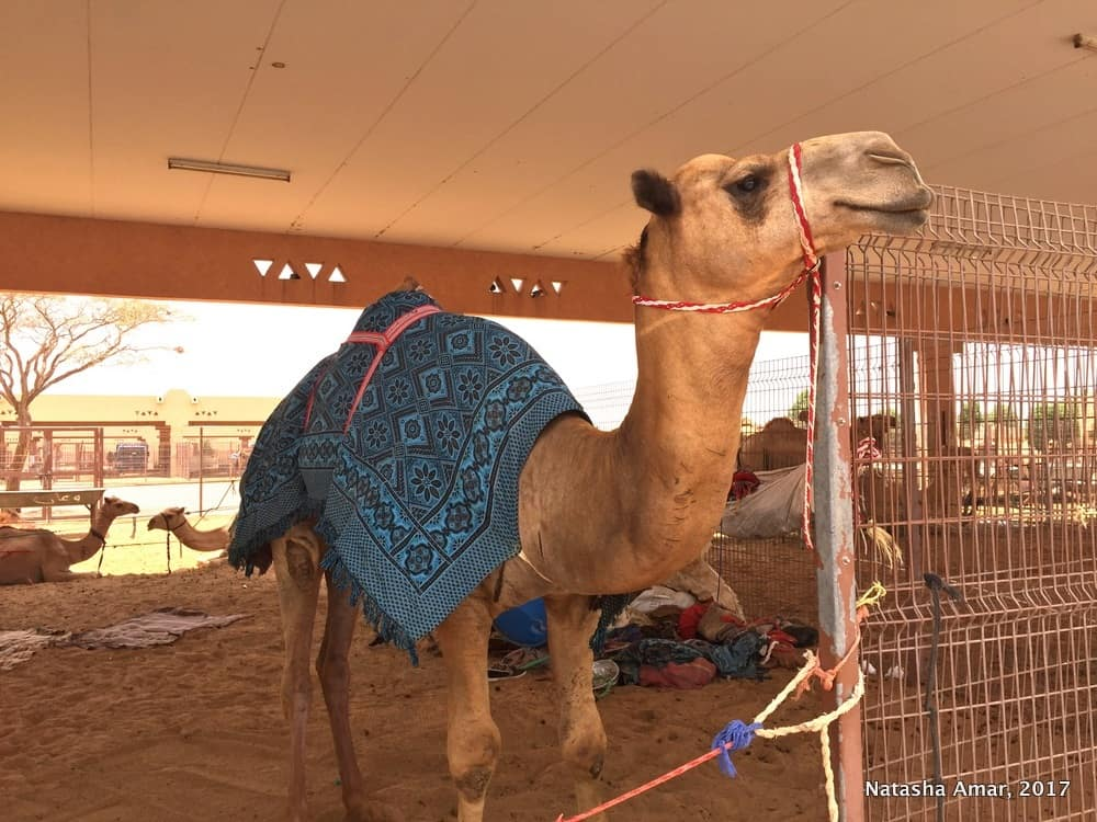 Top Things to do in Al Ain: Al Ain Camel Market