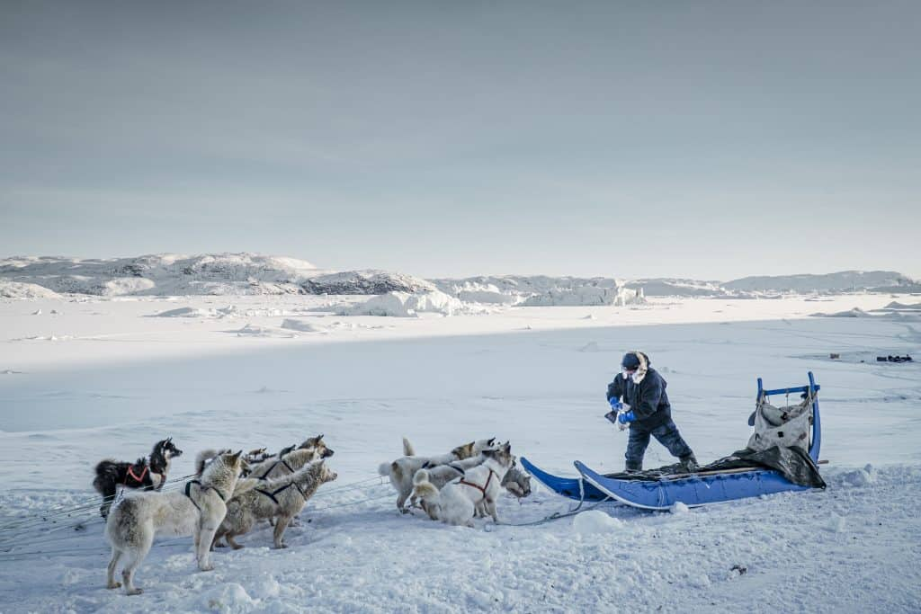 A fisherman feeds his sled dogs in Greenland