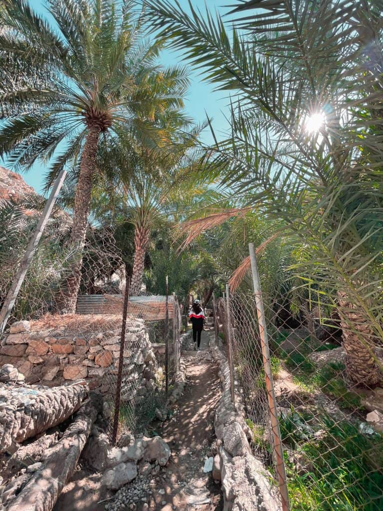 Walk along date palm plantations in Wadi Shees