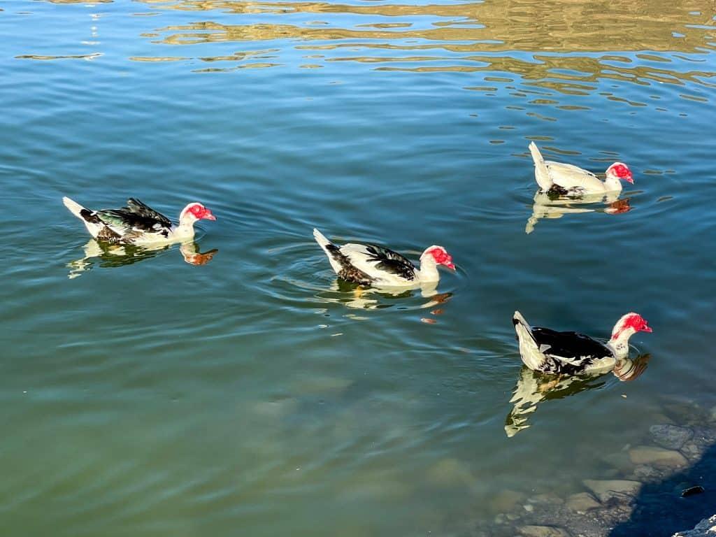 Birds at Al Rafisah Dam