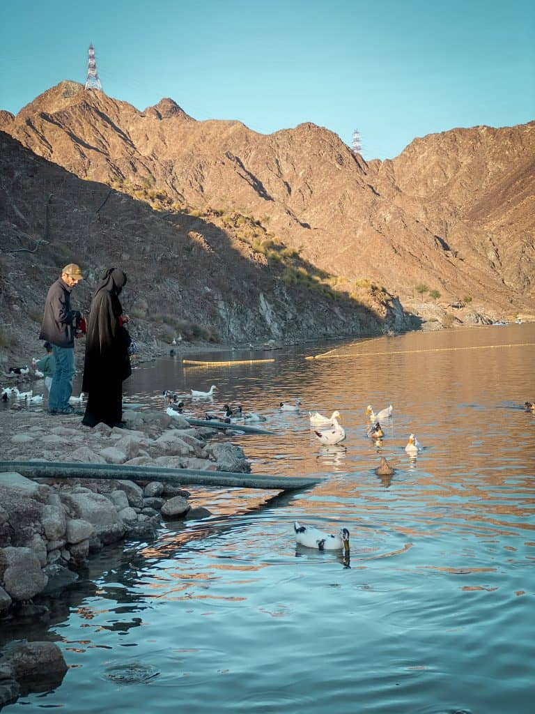 Feed the ducks at Al Rafisah Dam